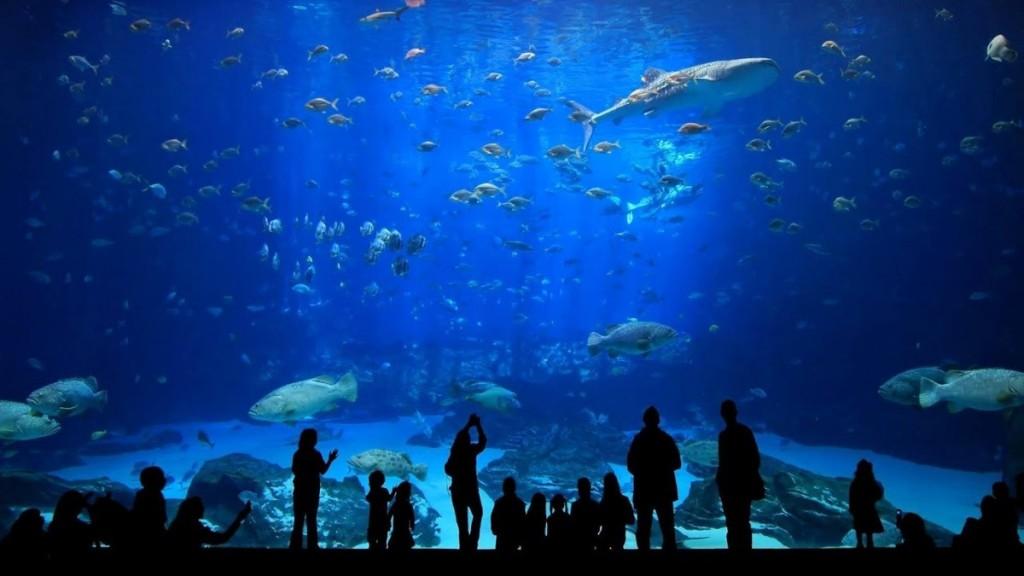 Poema del Mar Akvárium - Földünk vízi világa
