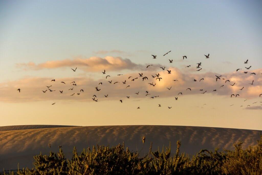 Észak- és Közép-Fuerteventura felfedezése*