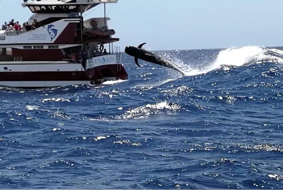 Plavba ľoďou so skleneným dnom za veľrybami