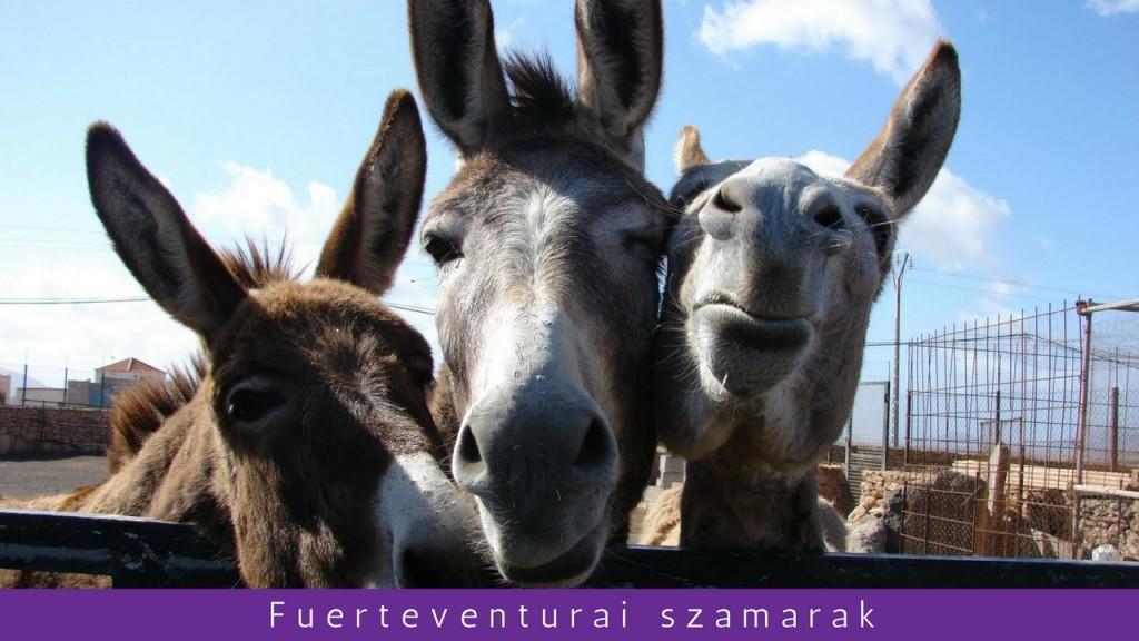 Fuerteventura szigettúra magyar nyelven