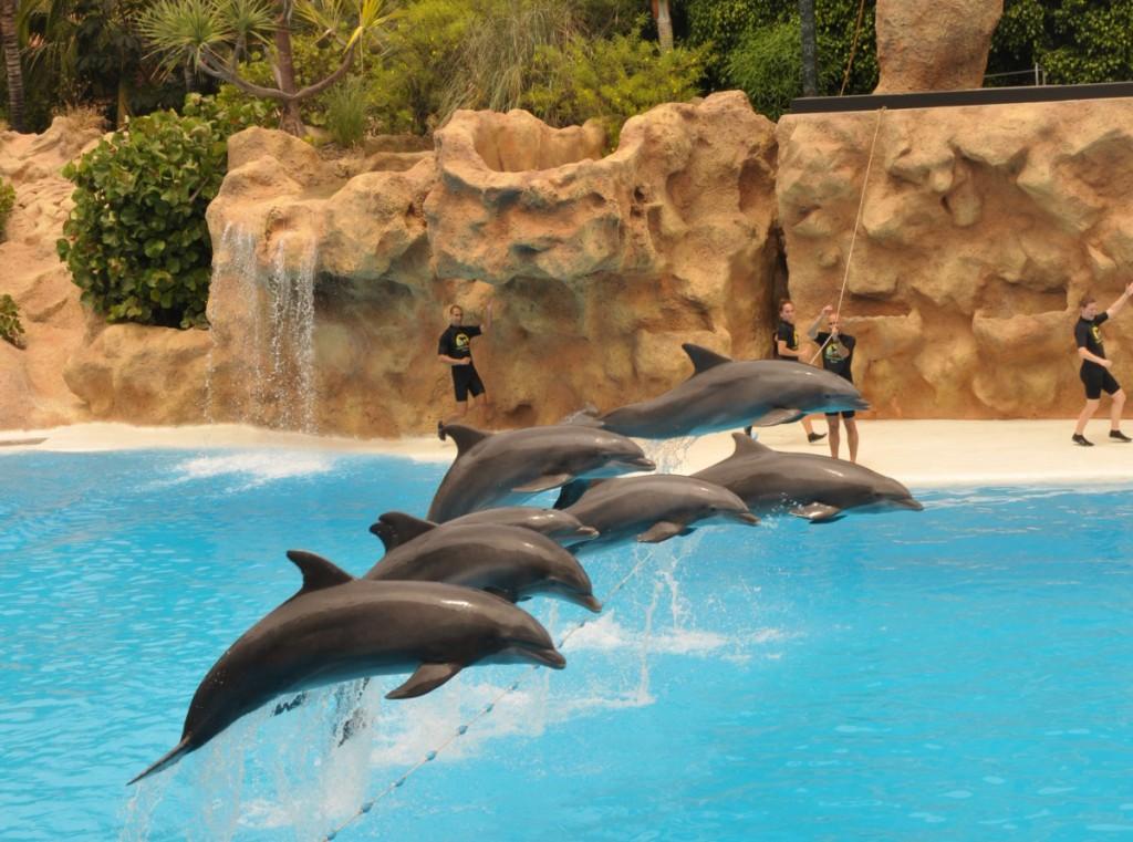 Loro Parque, a világ legjobb állat- és növényparkja