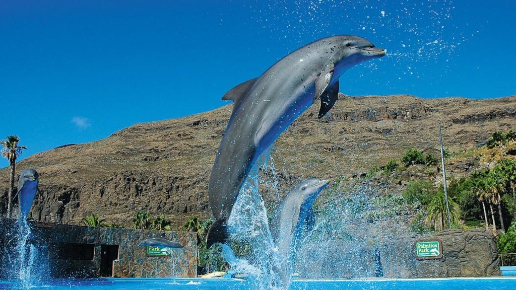 Aqualand Maspalomas és Palmitos Park kombi jegy